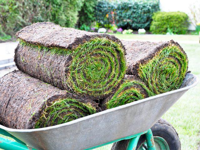Rollrasenshop liefert den passenden Fertigrasen für Ihren Garten